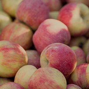 Fall for Fruit