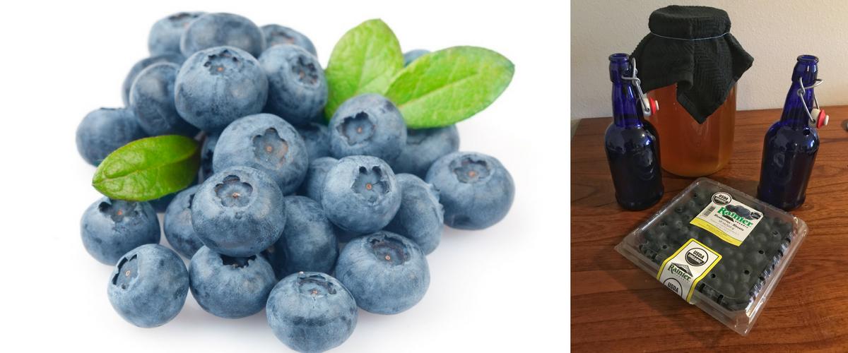 How To Make Blueberry Kombucha Rainier Fruit Company